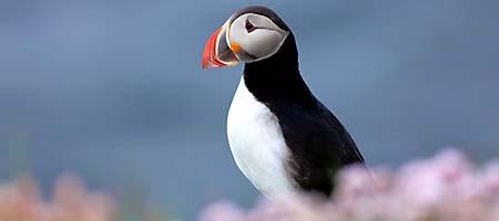 Tierfotografie Island Naturfoto Fotoreise