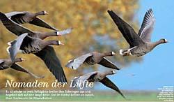 Wildgänse Naturfoto Schmid Uwe Niederrhein